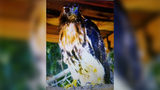 Birds thrown from vehicle while being transported from coast to Charlotte