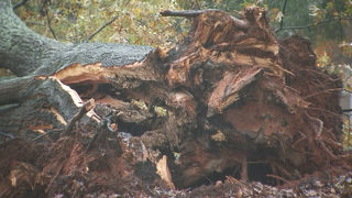 PHOTOS: Huge tree falls across Providence Road in south Charlotte