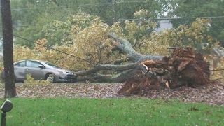 Toppled tree blocks Providence Road