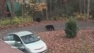 Asheville teen captures bears breaking into car for chocolate bars