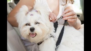 SPONSORED: Prepare your pet for a road trip