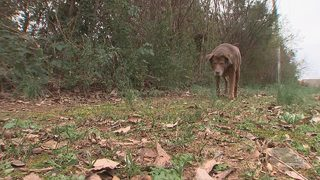 More Charlotte apartment complexes test unscooped dog poop to track down pet owners