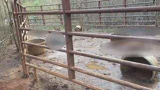 Cruelty investigated after more than 20 horses found dead in North Carolina