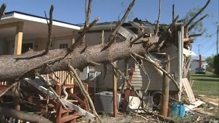 Arborist addresses vulnerable trees ahead of storm packing high winds