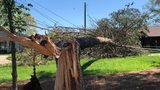 Cleanup begins for Denver residents after storms bring down trees, power lines