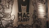 Your704: How Mac Tabby Cat Cafe is making a difference