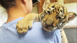 Tiger cub at Statesville zoo named in honor of fallen Mooresville officer