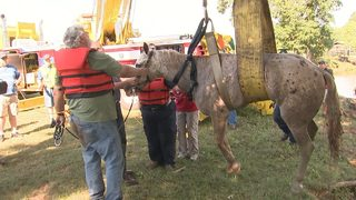 IMAGES: Horse rescued from Claremont pond