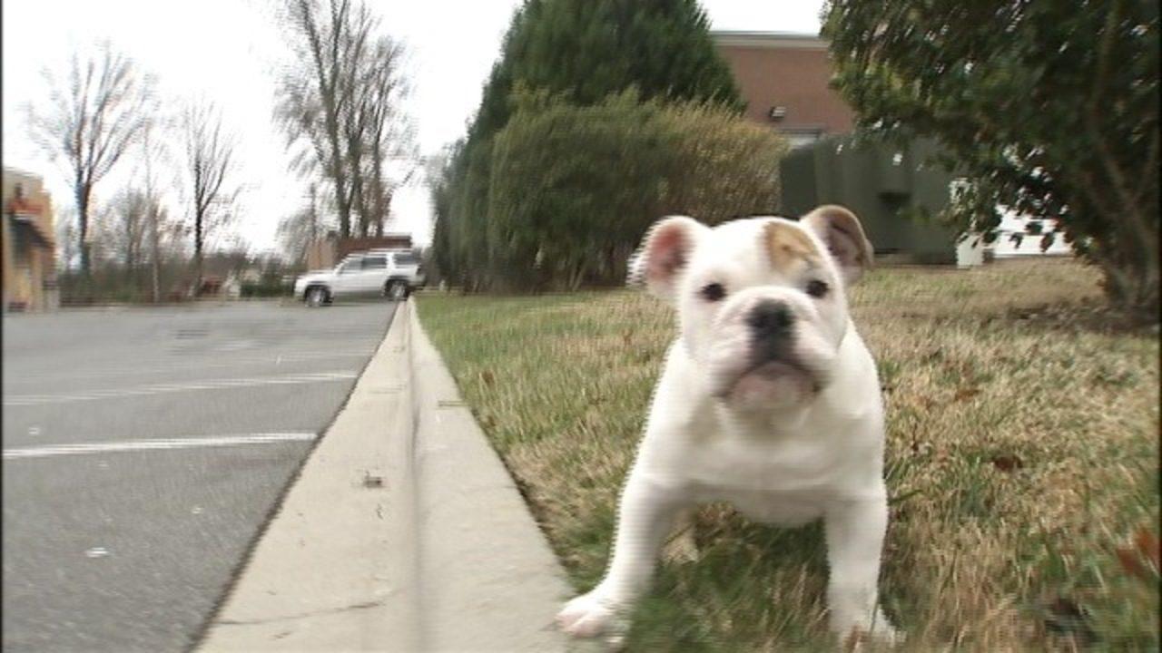 Puppy Scammer List 2020.Puppy Scam Authorities Warn Of Bogus Online Pet Sellers
