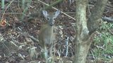 Hunter reportedly kills deer with bow, arrow, near south Charlotte park