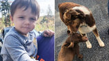 2-year-old found wandering down York County road with 2 dogs