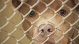 Charlotte-Mecklenburg animal shelter reaches overcrowding levels